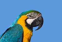 Macaw Pofile