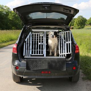 Hund in einem Auto auf Reisen