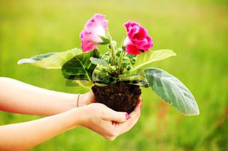 Flower in woman hands