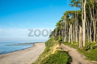 Buchenwald an der Ostsee