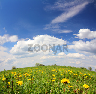 spring landscape with dandelion flowers