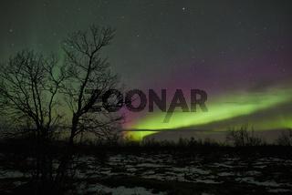 Nordlicht (Auroa borealis) , Lappland, Schweden