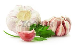 Fresh garlic with parsley isolated on white