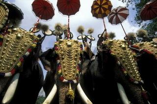 Elefanten am Pooram Festival in Thrissur in der Provinz Kerala in West Indien in Indien.