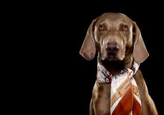 Hund mit Halstuch.jpg