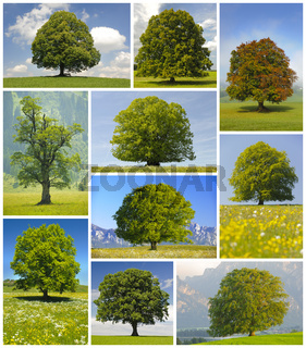 Kollage mit großen alten Laubbäumen