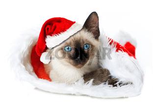 Weihnachtskätzchen