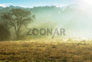 Fog on meadow