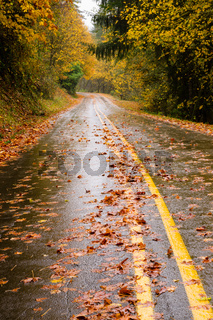 Wet Roadway Covered in Fall Leaves Autumn Highway
