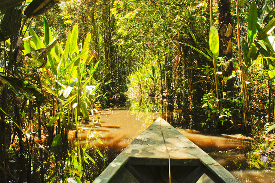 Amazon Basin, Tambopata National Park, Peru, boat