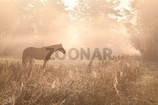 horse sulhouette in foggy sunshine