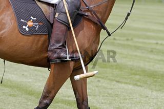 Beine von einem Polo Pony mit Stick
