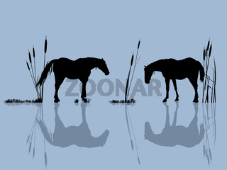 Horses at the water