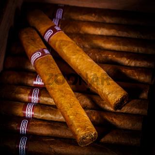 Cigars in humidor