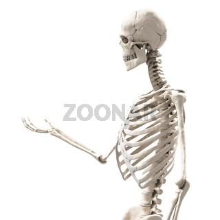 skeleton holding something
