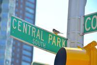 Central Park Vogel