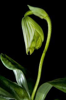Orchidee Serienfotos