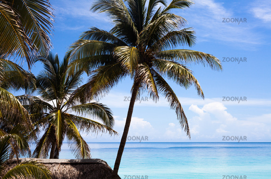 Foto Karibik Kuba Palmen Strand Hutte Bild 6156475
