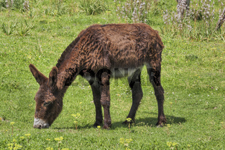 Esel | Donkey
