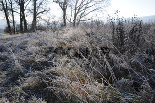 Wiese mit Reif, Meadow with white frost