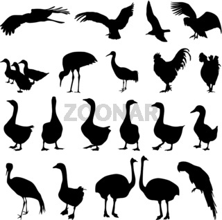 Set  silhouettes  birds in the zoo collection on a white background. Vector illustration.