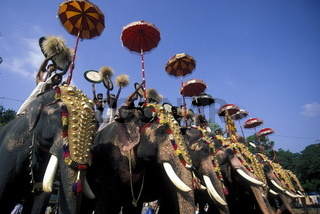 Elefanten am Pooram Festival in Thrissur in der Provinz Kerala in West Indien in Indien.