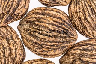 black walnuts abstract