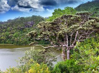Nature of Mauritius. Lake and tropical trees