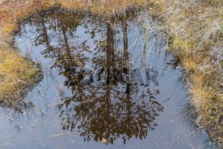 Kiefern spiegeln sich in einem Sumpfsee, Lappland