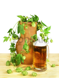 Beer still life. Glass of beer with flowers and leaves of hop (Humulus lupulus) in a clay pot on a wooden table. Isolated on a white background.