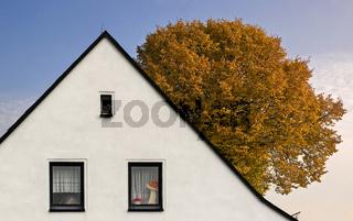 Dachform mit Baum