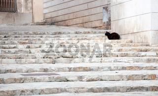 Black cat on white limestone steps