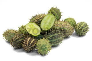 prickly cucumber fruits