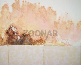 Bunter Schimmelpilz an der Wand