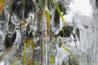 hart die Natur durch Kälte