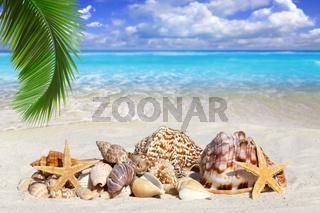 Muscheln liegen am sonnigen Strand unter Palmwedel