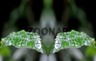 zwei nasse Kastanienblätter