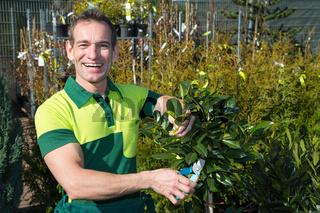 Gardener pruning a tree or plant at nursery