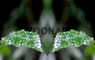 Kastanienblätter nass