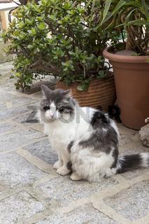 Katze auf einer Straße auf Elba, Italien