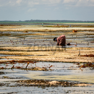 worker of Zanzibar