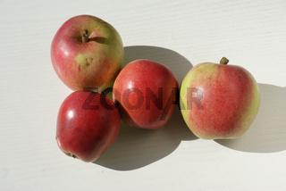 Malus domestica Rheinischer Bohnapfel