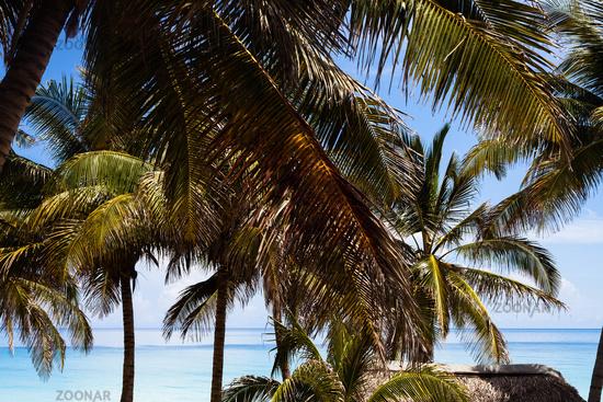 Foto Karibik Kuba Palmen Strand Hutte 2 Bild 6156473