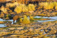 Elefant in Abendsonne am Fluss