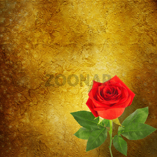 Red rose with green leaves on abstract background