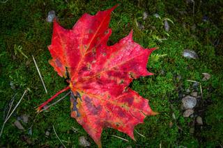 Bunter Herbst-2