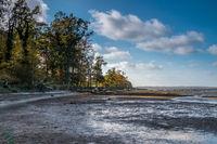 Strand der toten Bäume
