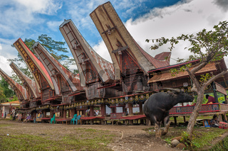 Tongkonan houses, traditional Torajan buildings, Tana Toraja, Sulawesi, Indonesia