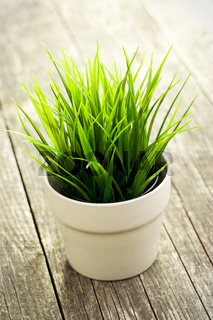 decorative green grass in flower pot