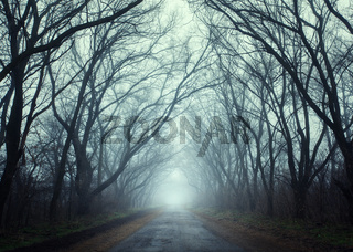 Mysterious dark autumn forest in fog with road, trees and branch